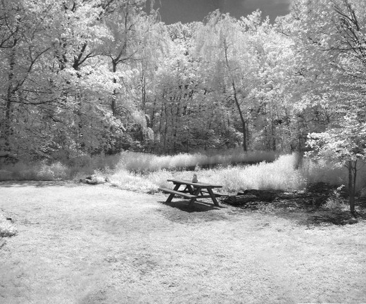 infrared in my backyard