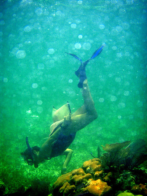 Great Snorkeling Picture