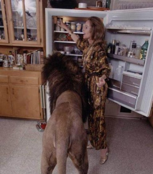 Tippi Hedren's pet lion from the 70's.
