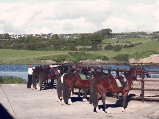 Horses wait during pub run