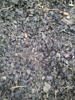 Cocoa hull mulch