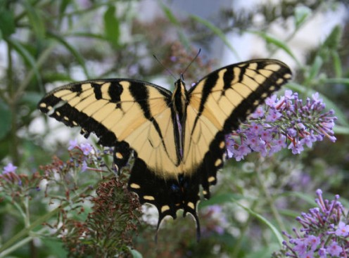 Container Garden Designs to Attract Butterflies