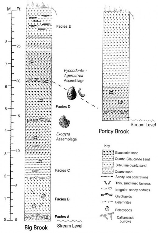 Figure 1: Summary diagram of the Navesink formation at Big Brook and Poricy Brook localities (Bennington, 2003).