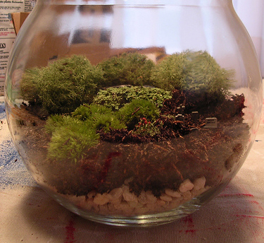 A moist terrarium with a variety of mosses.