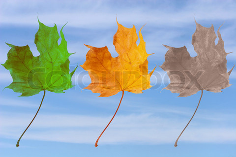 The colors of the leaves indicate the chapters of our life.
