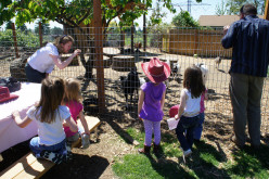 Science Activities for Young Children:  Farm Animals Unit