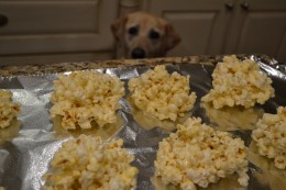 Charlie the Labrador Retriever looks longingly at popcorn balls that have been set out to cool.