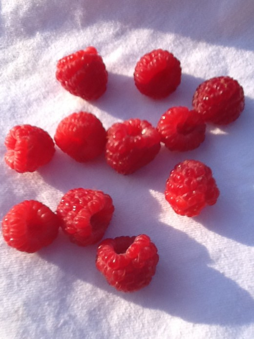 Fresh picked raspberries - they only had to travel from my backyard to the kitchen table