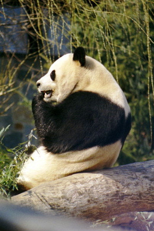 Google Panda Changed The Way SEO Works.