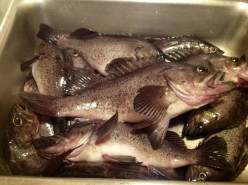 Sea Bass Fishing Tips
