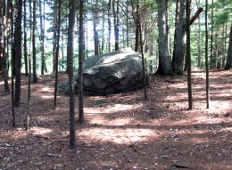 Forest strewn with glacial boulders