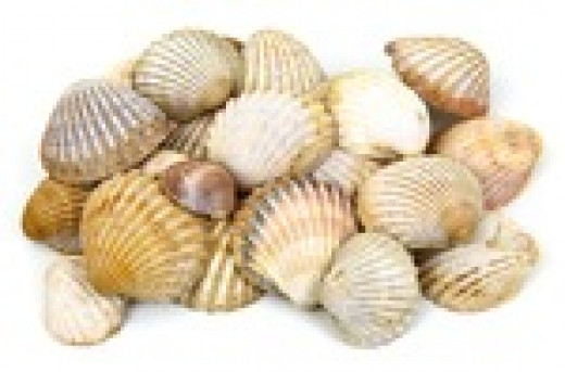Many beaches are littered with shells.