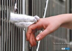 How animals are like us and should stop being abused.