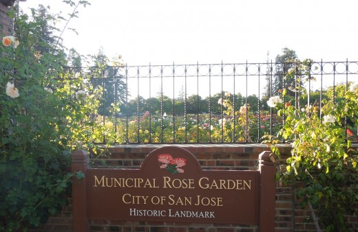 Municipal Rose Garden in San Jose CA