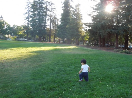 A Baby Walking in the Field at Municipal Rose Garden in San Jose CA
