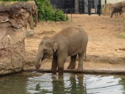 Elephants 101