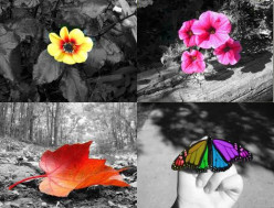 Color Splash Image Effect - how it is made with PHOTOSHOP CS5
