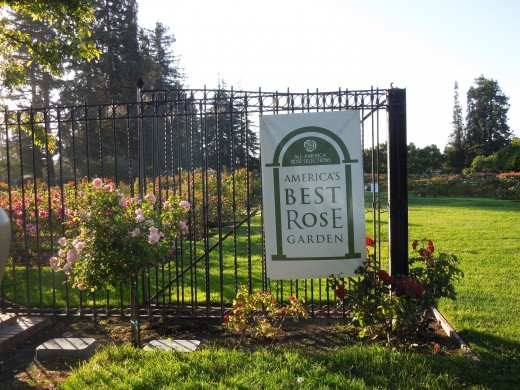 Best Municipal Rose Garden