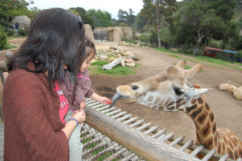 Feeding the giraffes at the Santa Barbara Zoo is an experience the whole family will remember.