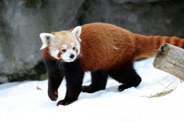 Awwww!  So cute, but they are wild animals and I'm sure they have a potential to be dangerous.