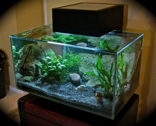 unusual aquariums biorb and fluval hubpages. Black Bedroom Furniture Sets. Home Design Ideas