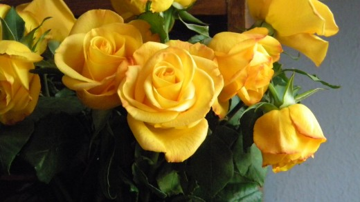 Hybrid tea roses are used by florists for arrangements.