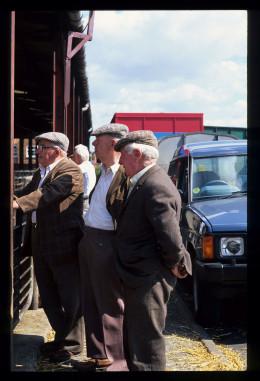 Old boys at the sheep market ...