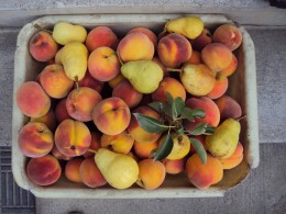 such as peaches, apricots...