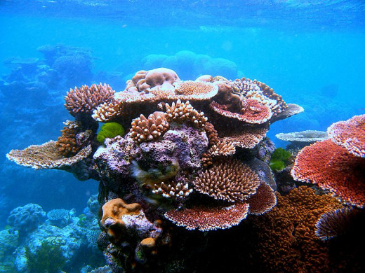 A variety of corals form an outcrop on Flynn Reef, part of Great barrier roof near Cairn, Queensland Australia