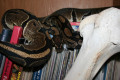 An In-depth Ball Python Care Sheet