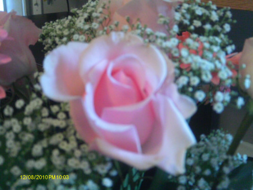 Pink Rose of Gratitude