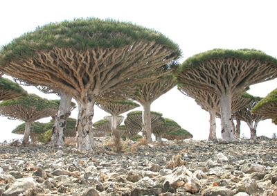 The Socotra Archipelago