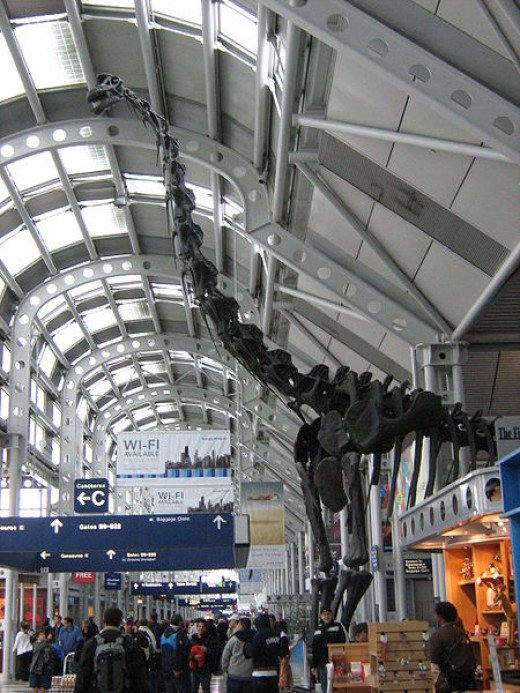 This mounted skeleton of a brachiosaurus in Chicago O'Hare Airport, gives you an idea of just how big the largest dinosaurs were.