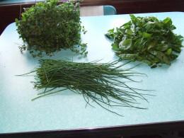 Dividing Herbs.