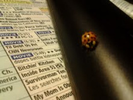 Here is a pic of Miss Ladybug on the tv remote