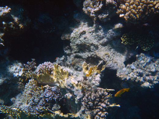 Northern Red Sea - Coral, Sharks Bay, Egypt