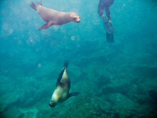 Santa Cruz, Galapagos, EC