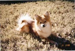 Shadow, my sweet dog.