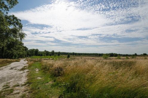 De Maasduinen National Park in the province of Limburg