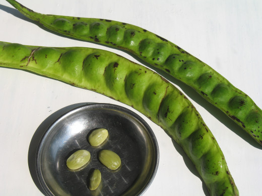 Eating petai beans can prevent heartburn from occurring.