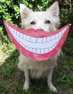 How To Clean Your Dog's Teeth The Easiest Way? - Have Them Do It Themselves by Chewing!