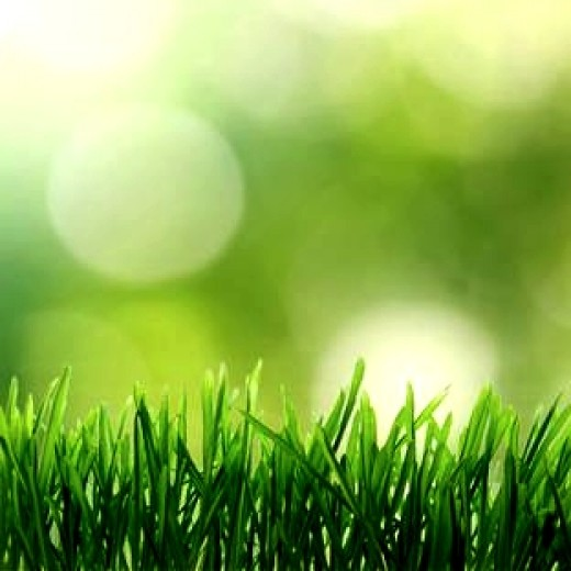 Keeping your grass growing is the key to maintaining a healthy organic lawn. Don't mow it too close to the ground.