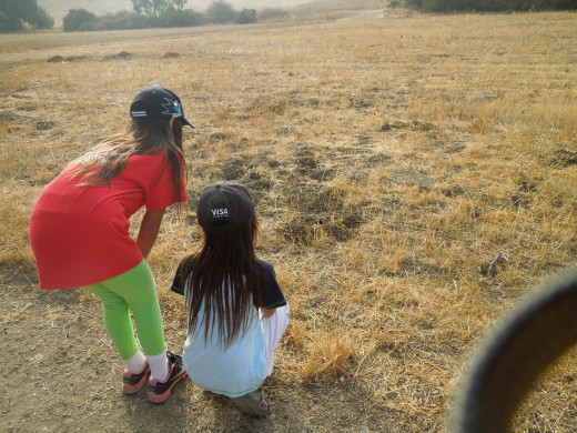 Kids Watching A Squirrel Coming Out From the Hole in the Ground in Montgomery Hill Park San Jose CA