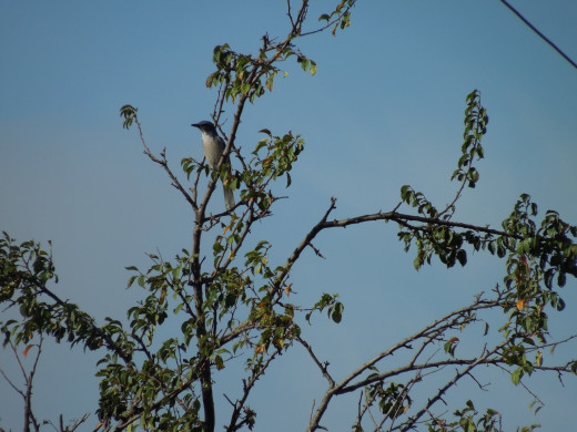 A Bird Perching on A Tree Branch in Montgomery Hill Park San Jose CA