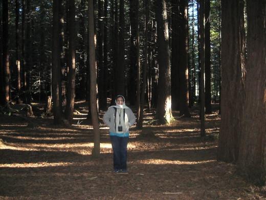 Under the tall Coast Redwood trees, Rotorua.