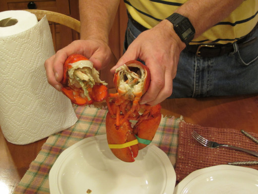 Removing the tail from a Maine lobster.