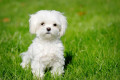Small Dog Breeds That Are Good With Children