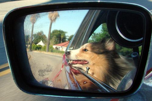 The way a dog like to ride.