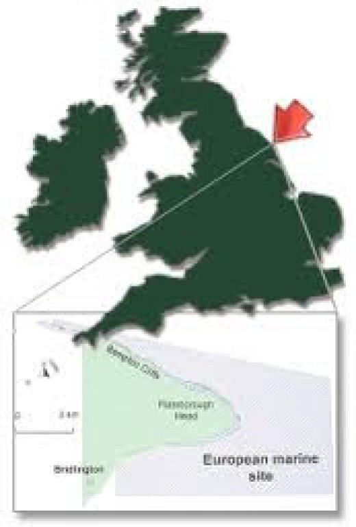 Where Flamborough Head is located on the coast of East Yorkshire