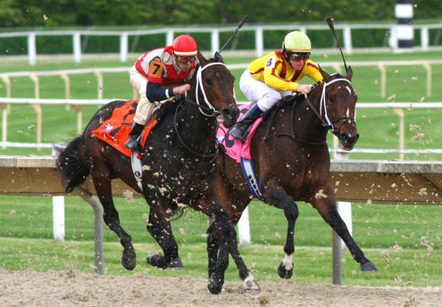 Arbitrage betting can give good results in horse-racing